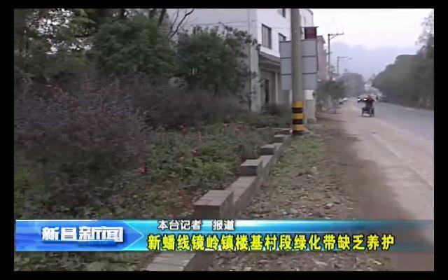今日聚焦:新蟠线镜岭镇楼基村段绿化带缺乏养护
