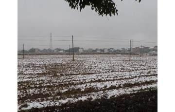 雨雪导致农作物受损 农技专家下乡指导自救