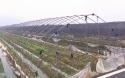 姚江鎮:草莓苗本地流轉保內供