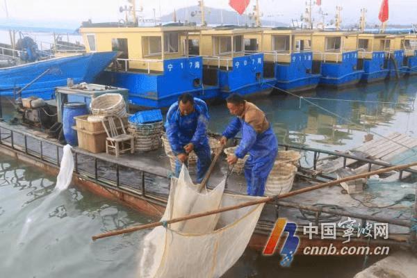 """宁海湾""""虾籽""""采收忙 渔民一天收入几千元"""