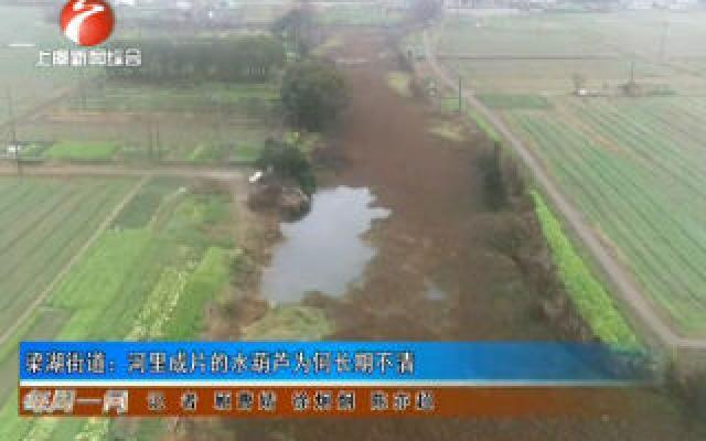 梁湖街道:河里成片的水葫芦为何长期不清