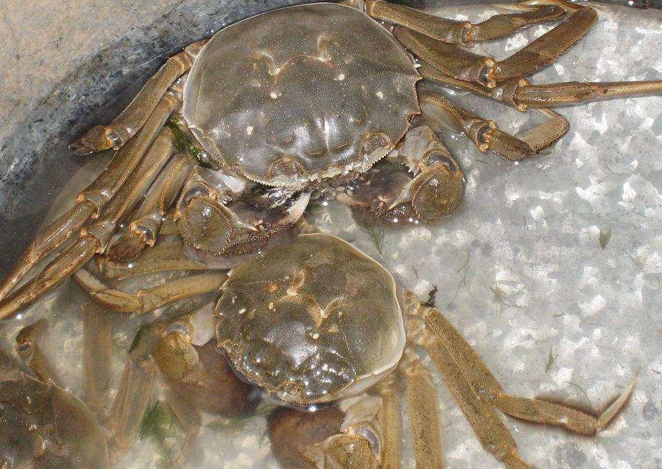 捆扎物不得超过单体总重的5%!宁波规范蟹类捆扎销售行为