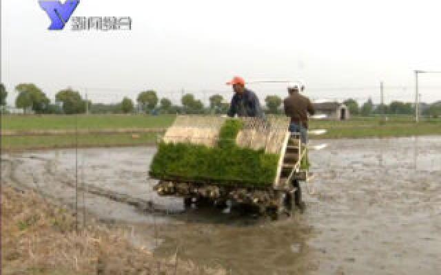 全市早稻插种进入高峰期