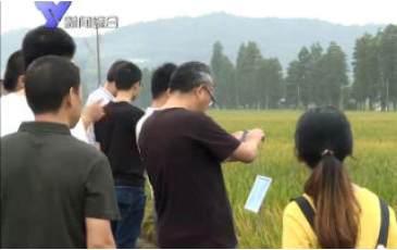 全省早稻新品种现场考察会在姚举行