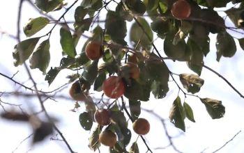 火柿、吊瓜、稻浪......这个节日就在明天!