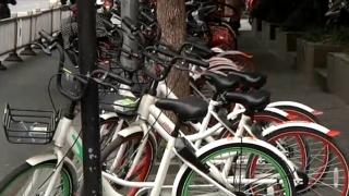 治理共享单车:监管平台上线 市民专家怎么看