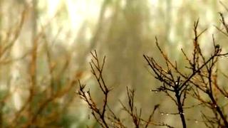24日起我省将有大范围雨雪天气本周冷空气来袭