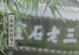 雨水 | 春雨细 春草萌 春色渐苏生