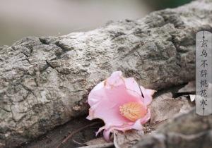 春分·视频 | 寒意隐去的途中 有未醒的春天