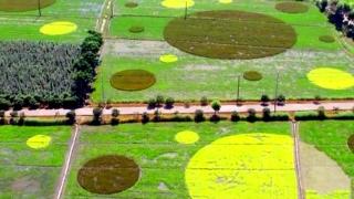 推广生态修复技术 打造最美稻田
