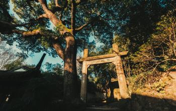 《西泠印社》第一集《君子》:印社遭遇危机如何化解?西湖旧影藏着多少故事!