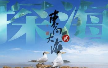 《東向大?!返诙簬~出水瞬間閃耀銀光,絕跡神鳥再現東海,大黃魚的叫聲你聽過嗎?