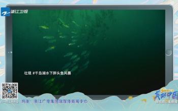 《美好中国》千岛湖水下胖头鱼风暴