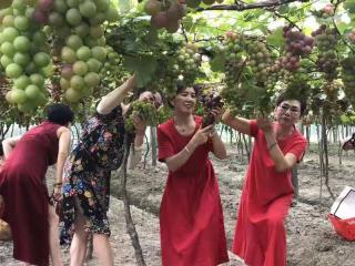 第二届葡萄节350.png