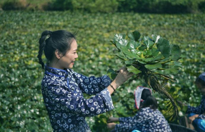 江南采菱  南浔区菱湖镇庆祝新中国成立70周年暨首届菱美食文化节举行(2)134.png
