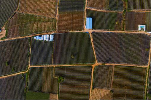 标题1:阿里巴巴1000基地直供双十一  海南农产品北上新鲜不隔夜(2)238.png