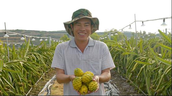 标题1:阿里巴巴1000基地直供双十一  海南农产品北上新鲜不隔夜(2)462.png
