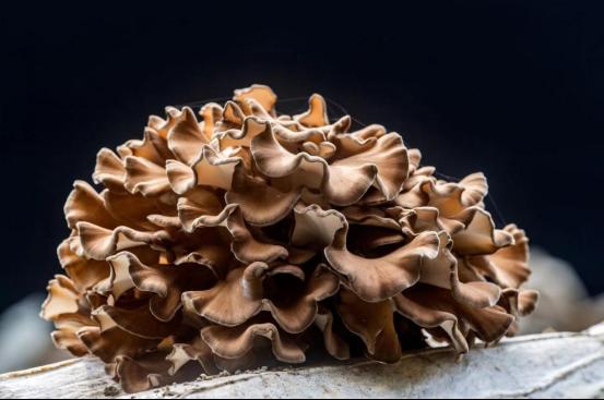 2019中国·丽水国际食用菌大会暨第十一届庆元香菇文化节举行619.png