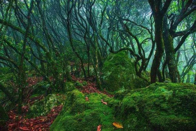 萧山周边这8个藏着25℃凉爽夏天的小森林,周末约起~~