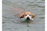 苏州有只环保狗 每天下河游泳捡瓶子