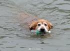 蘇州有只環保狗 每天下河游泳撿瓶子