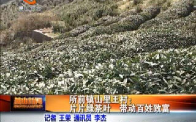 (鄉村振興-百村行)所前鎮山里王村:片片綠茶葉  帶動百姓致富