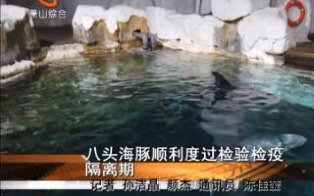 八头海豚顺利度过检验检疫隔离期
