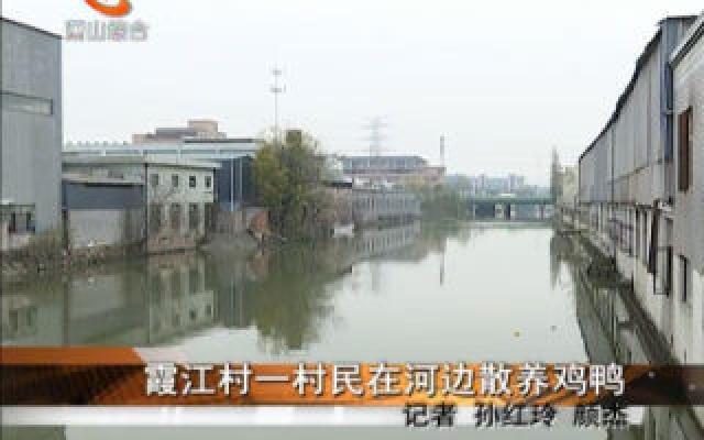 霞江村一村民在河边散养鸡鸭