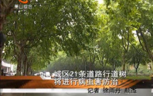 城区21条道路行道树将进行病虫害防治