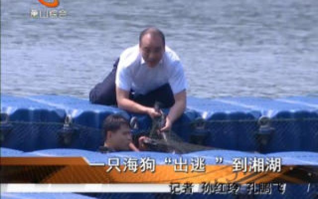 """一只海狗""""出逃 """"到湘湖"""