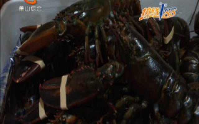 90吨波士顿龙虾运抵澳门威尼斯人娱乐注册机场  未来一周还有三批