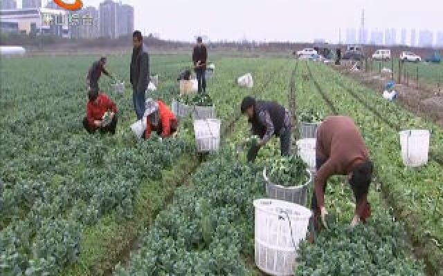 """我区被评为全国首批农作物病虫害""""绿色防控示范县"""""""