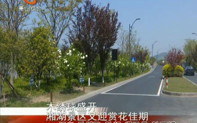 木绣球盛开 湘湖景区又迎赏花佳期