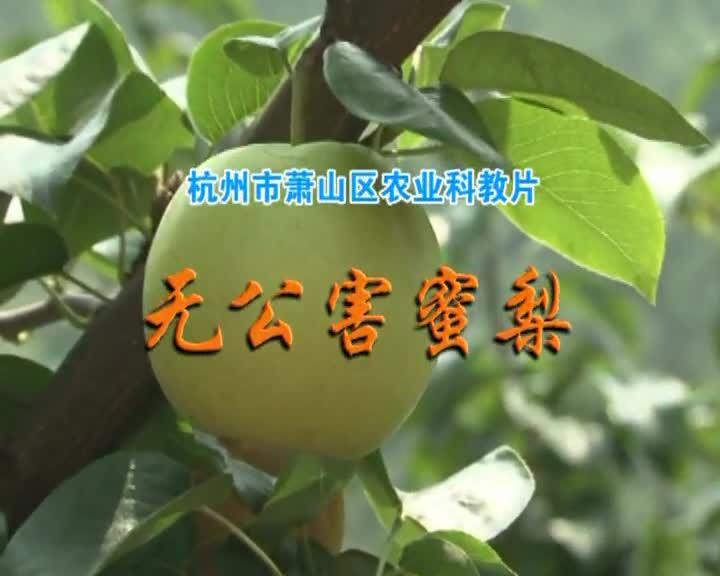 無公害蜜梨