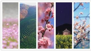 春天在哪里?5个故事告诉你