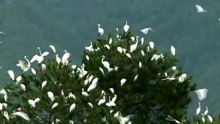 启动爱鸟周活动营造野生鸟类栖息佳地